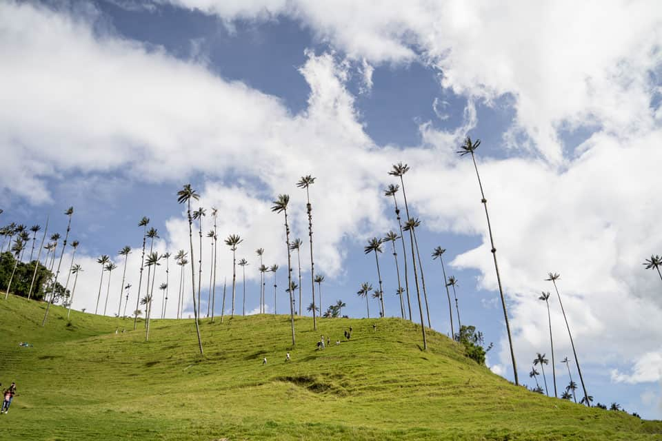 Guide to Hiking the Cocora Valley, Colombia