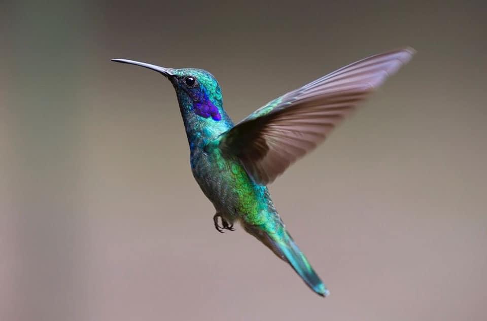 Salento-Hummingbird-Sanctuary
