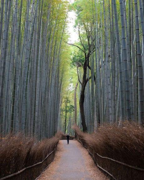 Arashiyama-Bamboo-groove-Forest