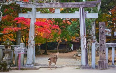 Nara Day Trip Itinerary: The Ancient Capital of Japan