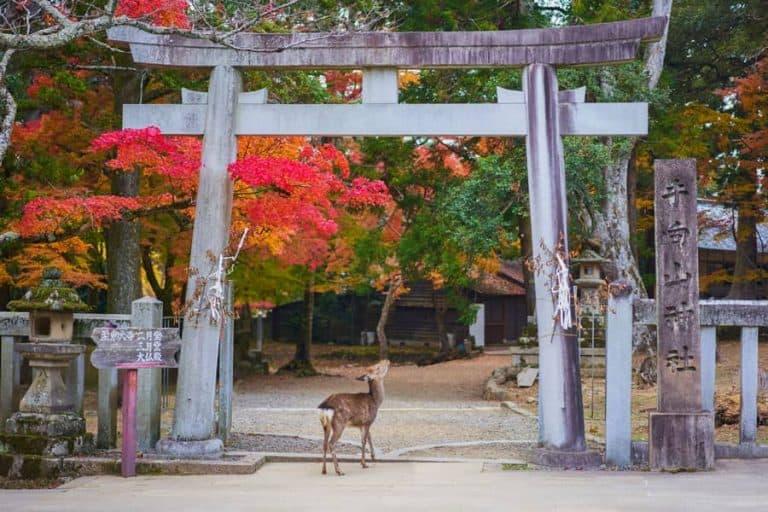 Nara Day Trip Itinerary: The Ancient Capital of Japan