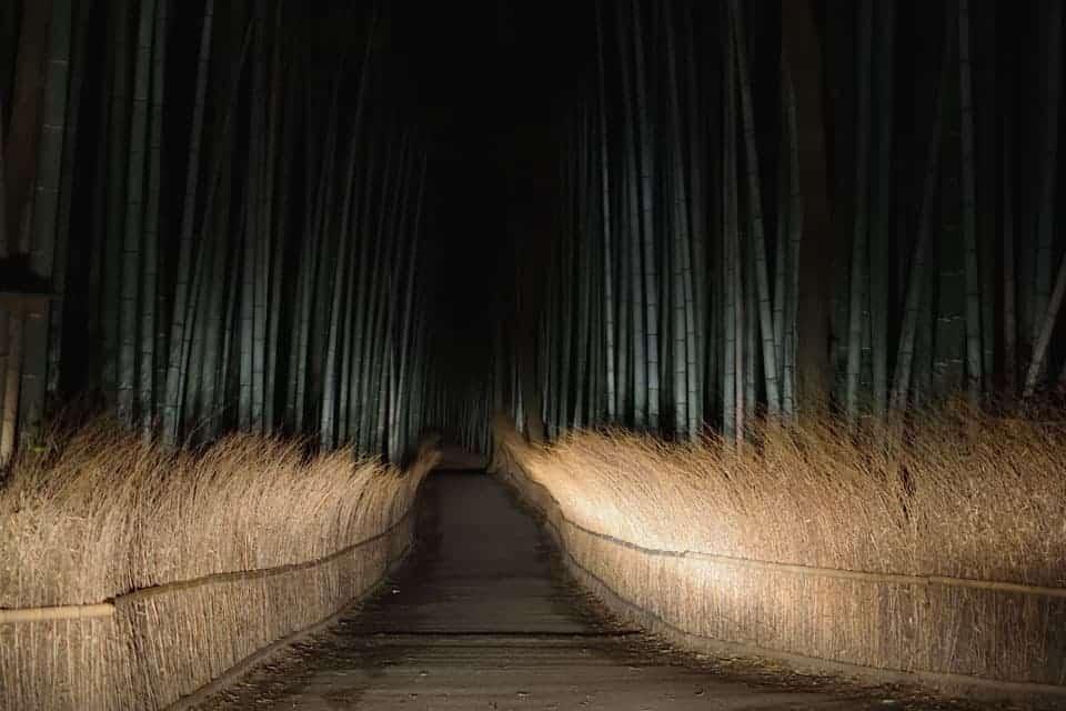 Kyoto-Arashiyama-Bamboo-Forest-At-Night
