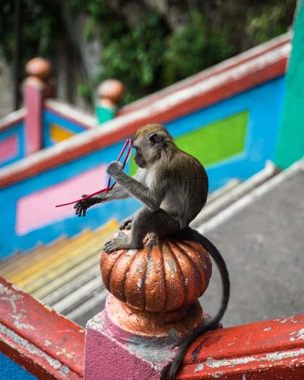 Batu-Caves-Monkey