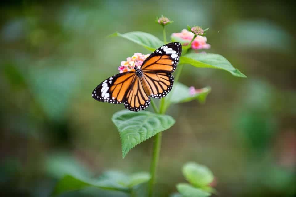 Butterfly-Garden-Kuala-Lumpur