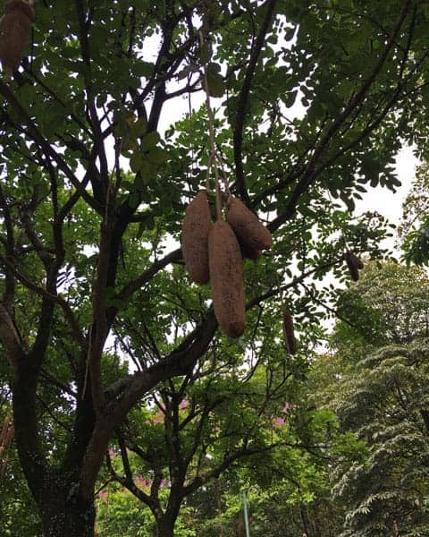 Perdana-Botanical-Garden-KL-Itinerary