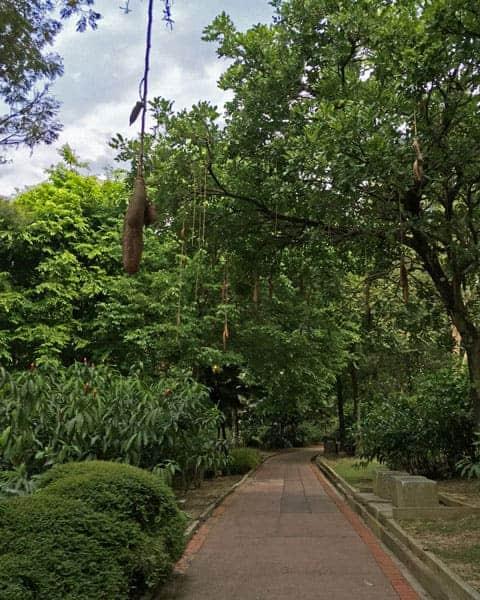 Perdana-Botanical-Garden