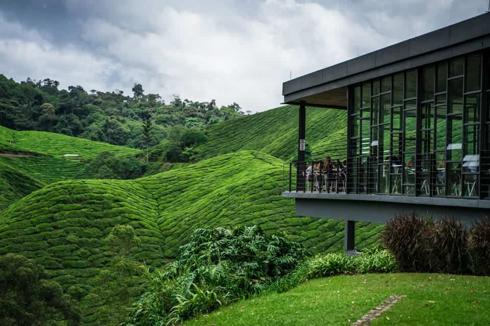 BOH-Tea-Plantation Cameron Highlands