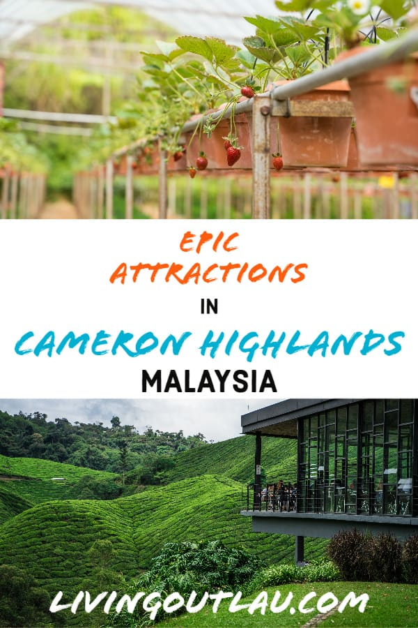 Things To Do in Cameron Highlands Malaysia Pinterest