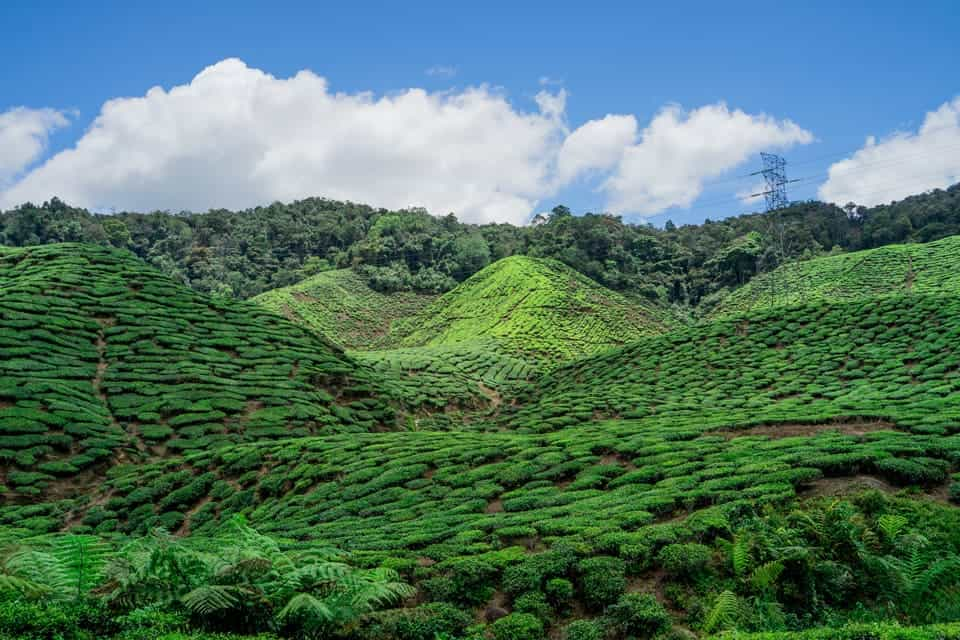 Hiking-Cameron-Highlands-Places-To-Visit