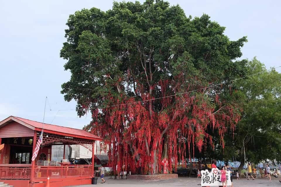Wishing-Tree-Sekinchan