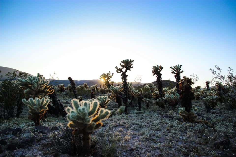 Joshua Tree National Park Beautiful Places To Visit In Winter In USA