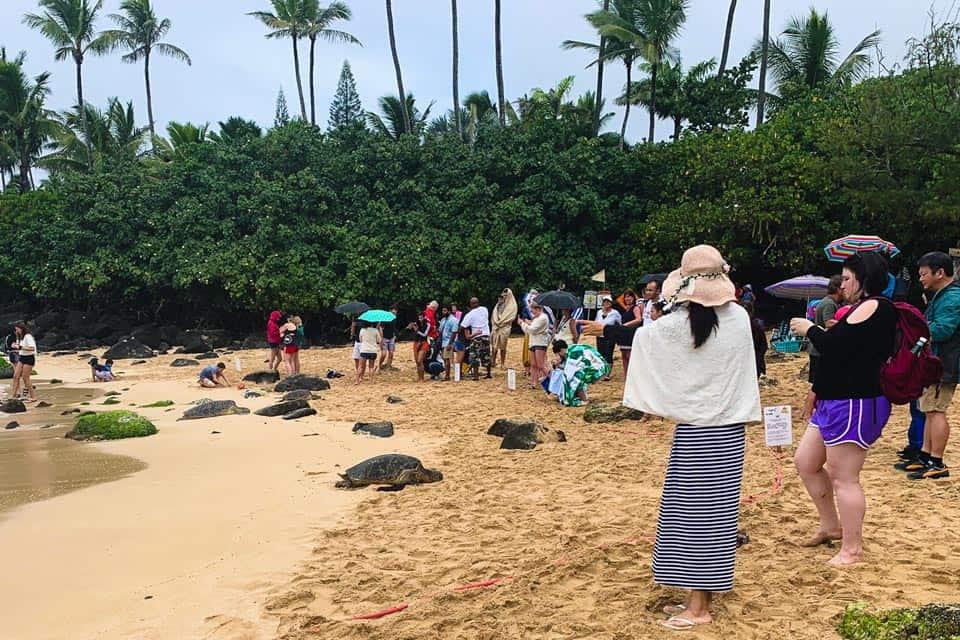 Laniakea Beach Oahu North Shore