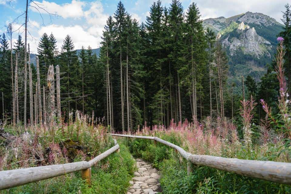 Hiking In Zakopane