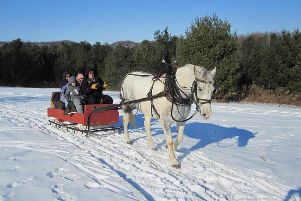 Winter Sleighing In Zakopane