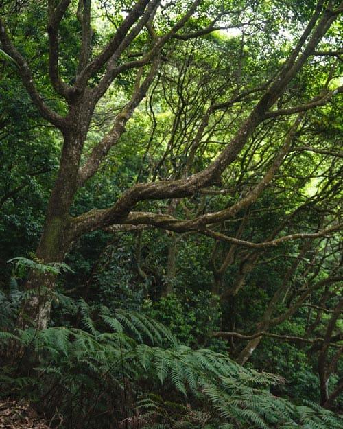 Hike Ng Tung Chai Waterfall