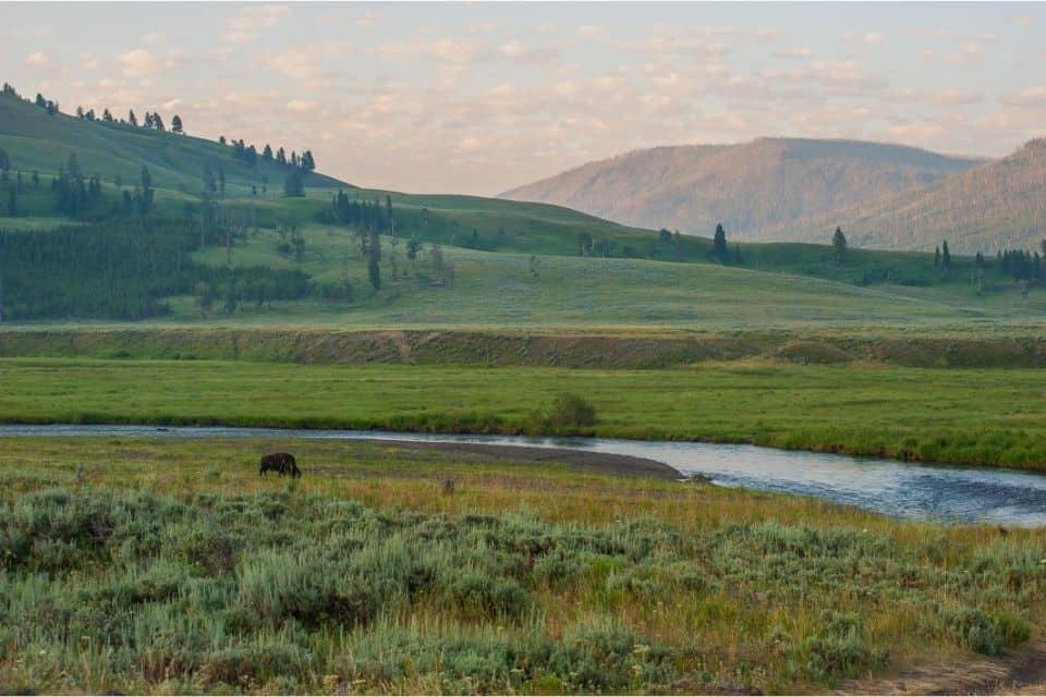 Lamar Valley Yellowstone