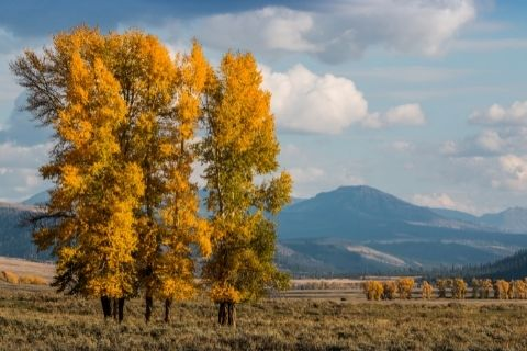 Visiting Yellowstone in September Featured