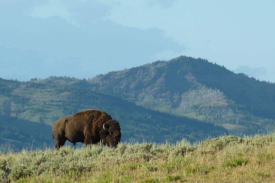 Yellowstone-in-4-days-itinerary