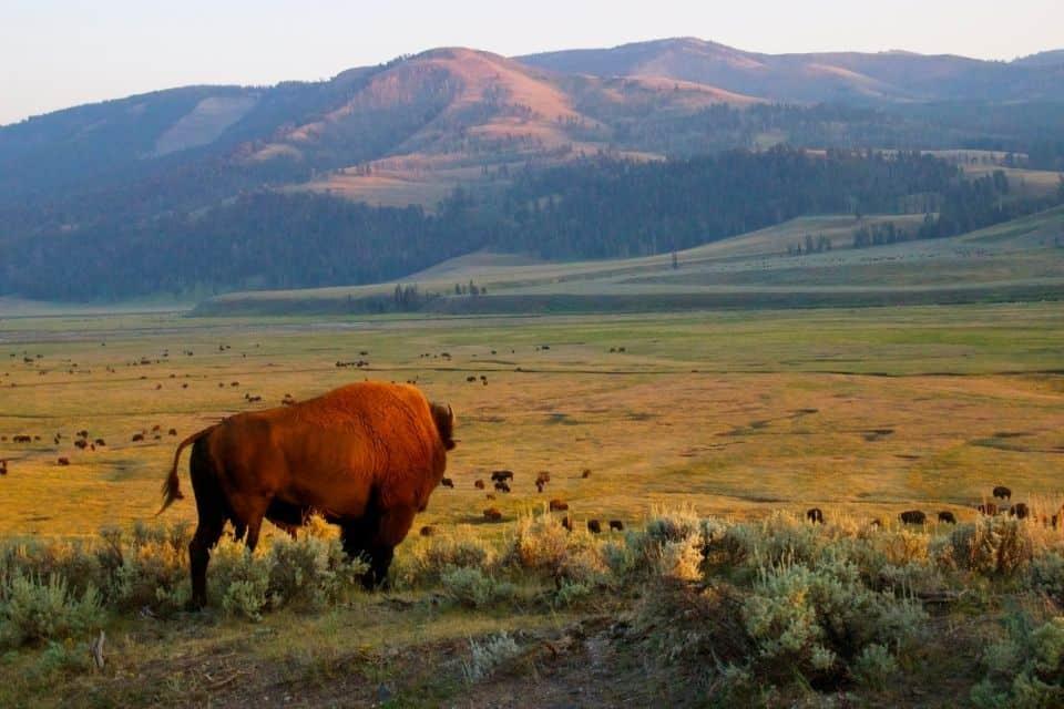 Yellowstone Packing List Winter
