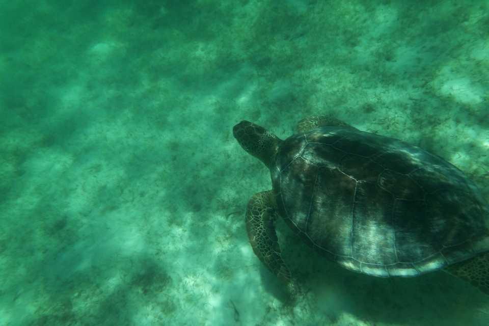 Akumal Beach Turtles Must-See Yucatan