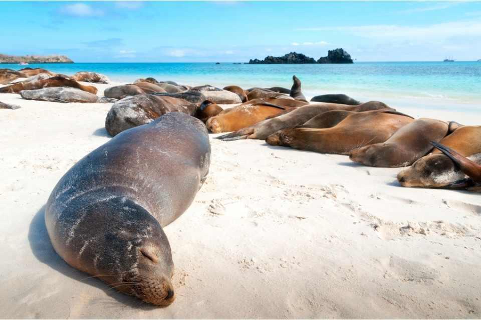 Galapagos Islands SA