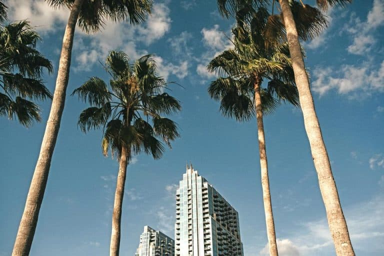Where To Stay In Tampa: 10 Best Airbnbs in Tampa, Florida